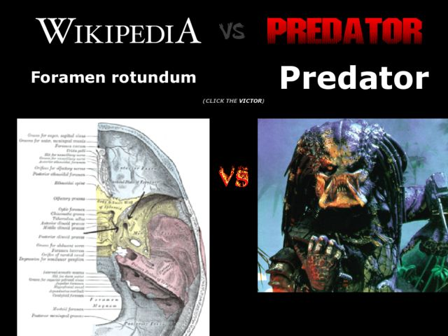 Wikipedia vs. Predator
