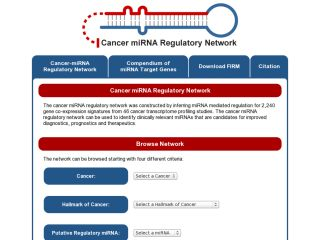 Cancer miRNA Regulatory Network